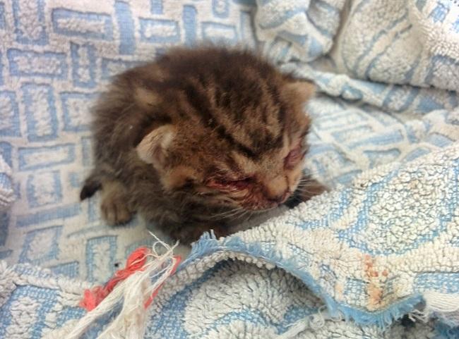 kitten appears right door 1