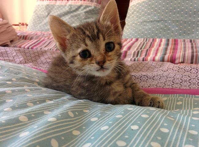 kitten appears right door 10