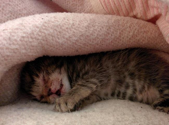 kitten appears right door 5