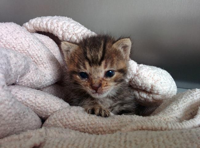 kitten appears right door 6