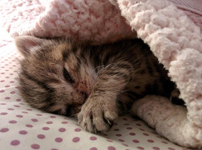 kitten appears right door 7