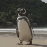ad199230273a-penguin-called