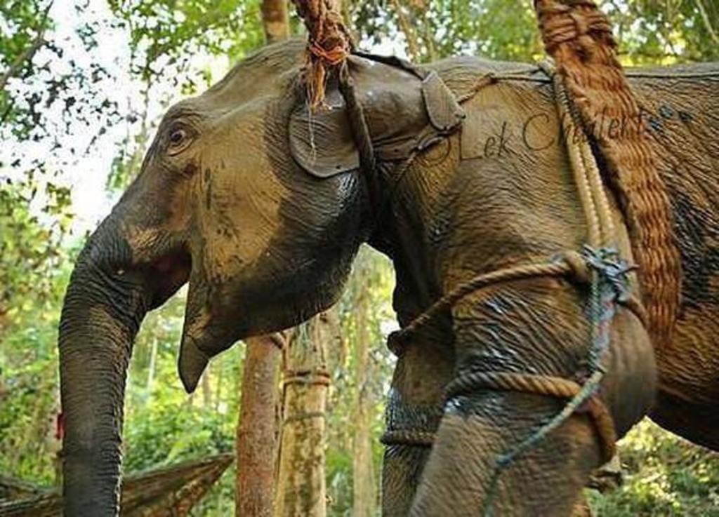 atrocidades cometidas zoologicos 2