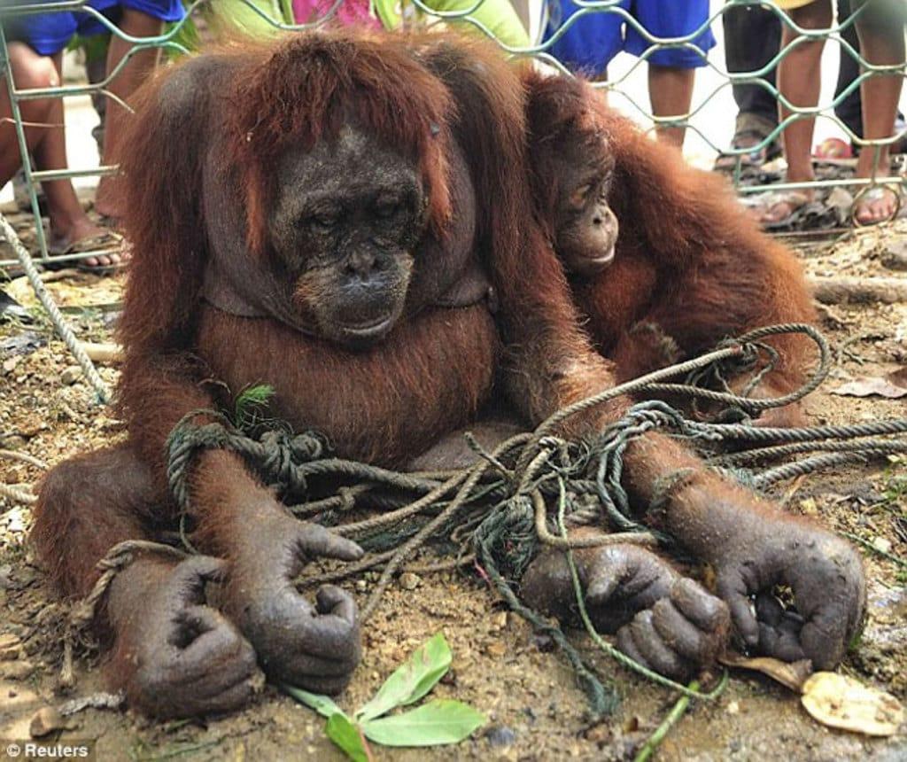 atrocidades cometidas zoologicos 3