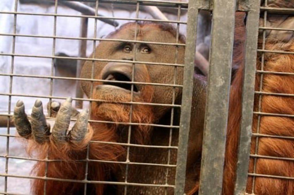atrocidades cometidas zoologicos 6