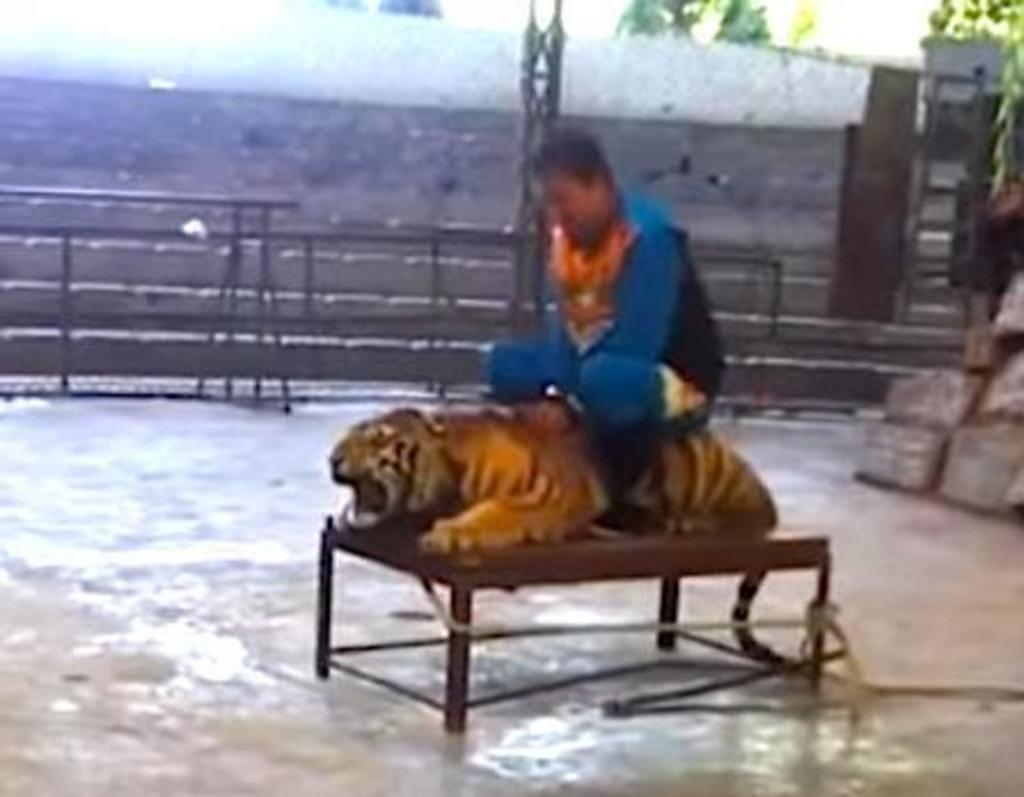 atrocidades cometidas zoologicos 7