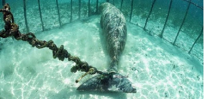 dugongos prisioneiros 3
