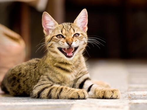 gatos-idosos 3