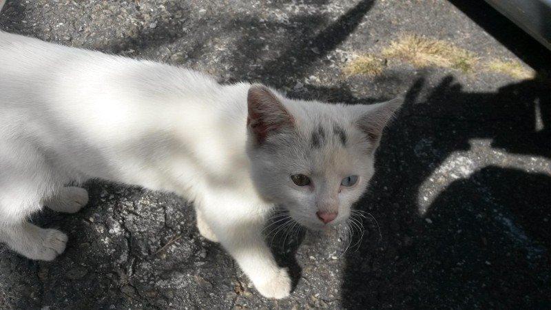 alimenta gatinha e ganha amor para vida 2