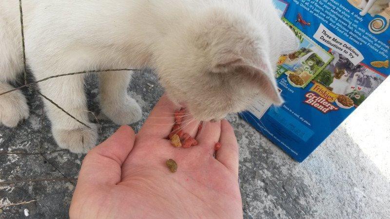 alimenta gatinha e ganha amor para vida 3
