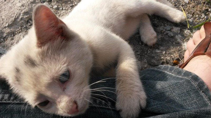 alimenta gatinha e ganha amor para vida 4