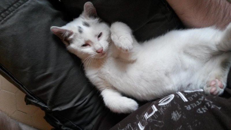 alimenta gatinha e ganha amor para vida 8