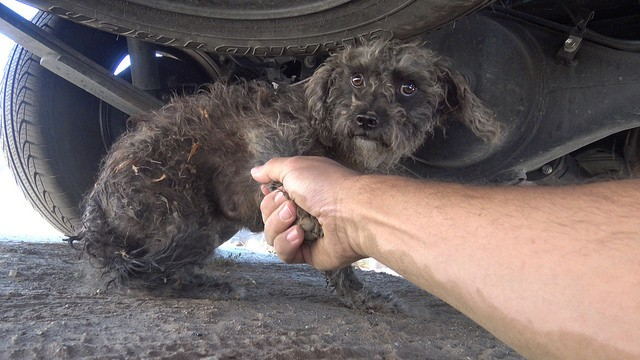 cadela aterrorizada resgatada 3