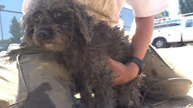 cadela aterrorizada resgatada 4