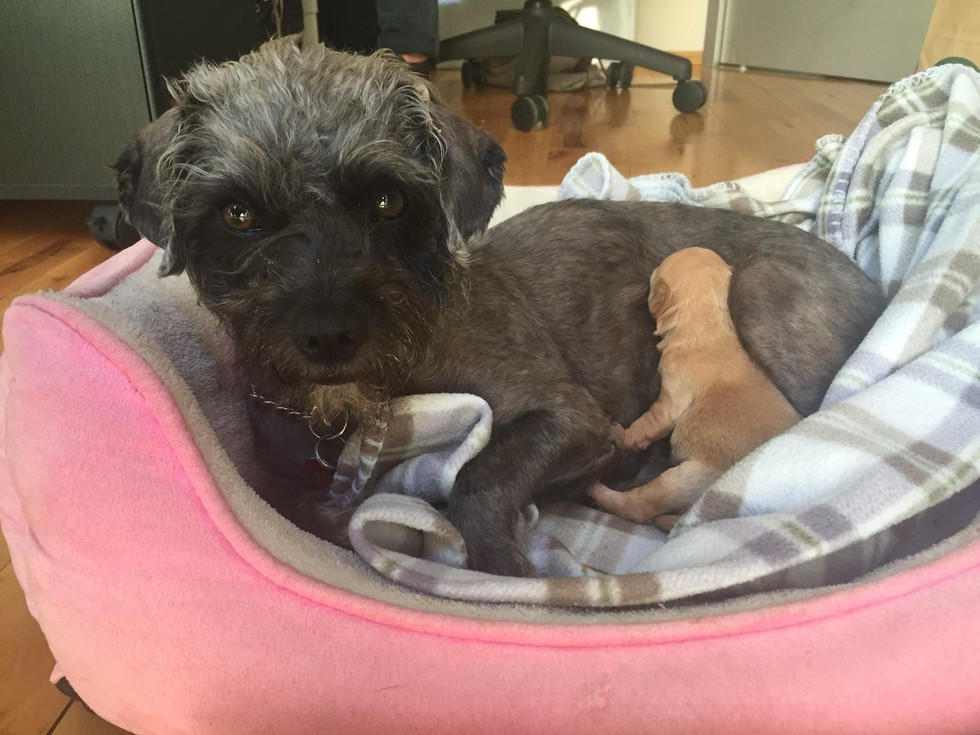 cadela aterrorizada resgatada 9