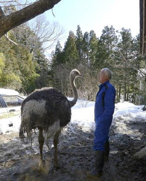 homem salva animais fukushima 2