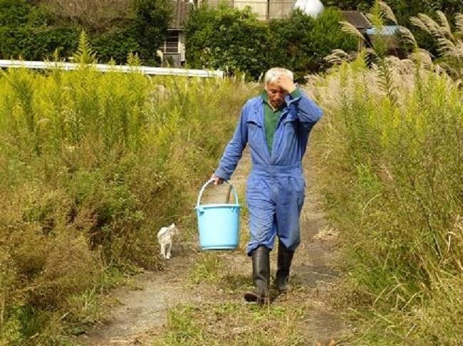 homem salva animais fukushima 4