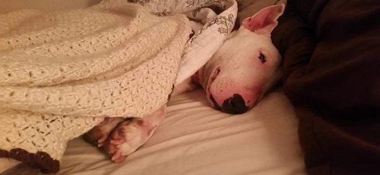 cadela experimenta cama primeira vez 1