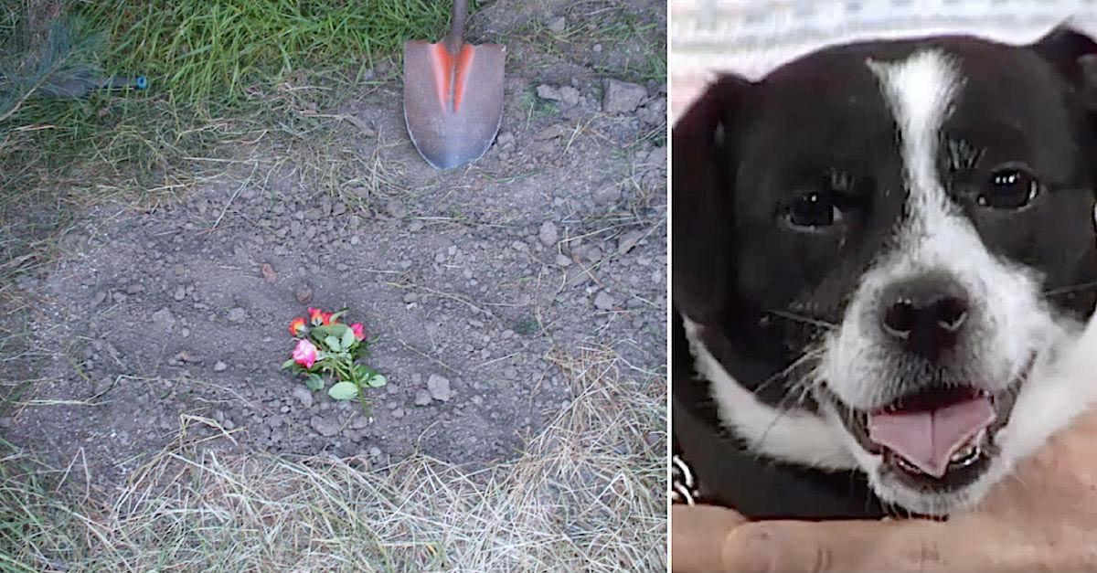 Família enterra seu cão atropelado, mas horas depois ele aparece milagrosamente na sua porta