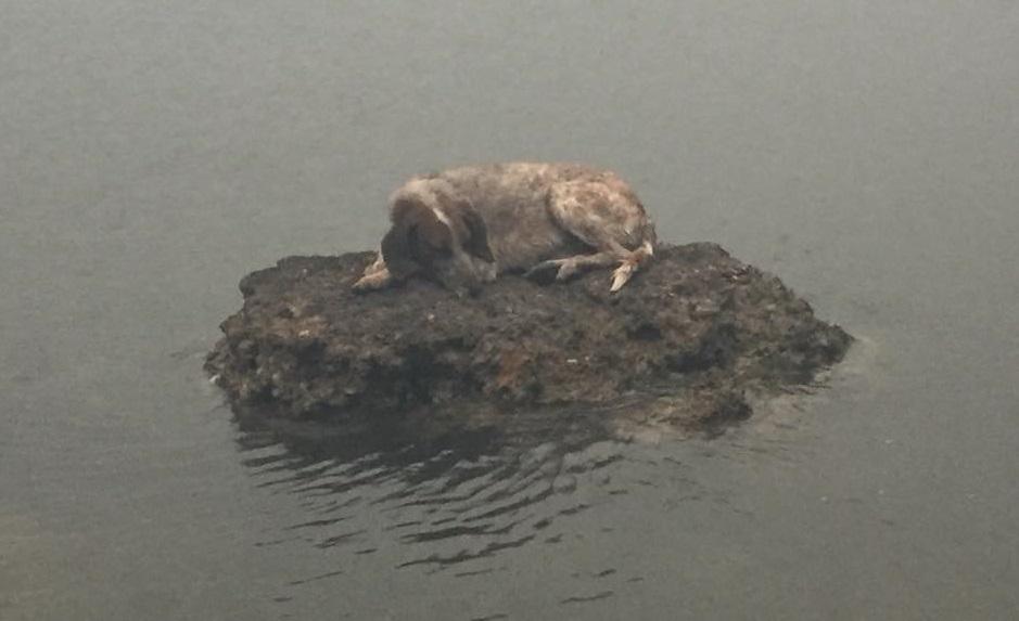 Cadelinha se salvou em uma rocha enquanto o fogo devorava ...