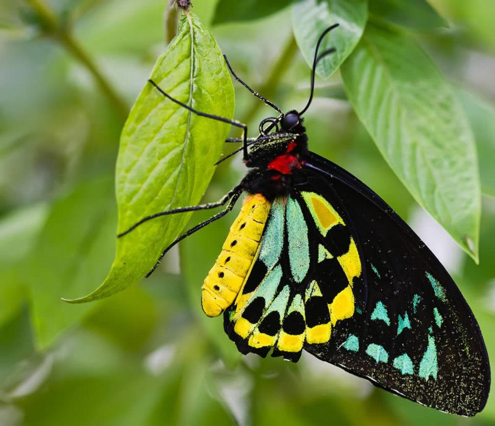 Resultado de imagem para borboletas mais lindas do mundo