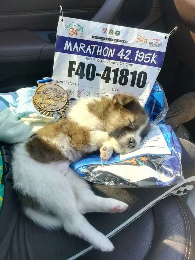 Mulher carrega cachorro durante maratona