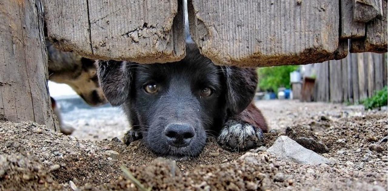 Holanda se torna o primeiro país do mundo sem cachorros abandonados – e não precisou sacrificar nenhum