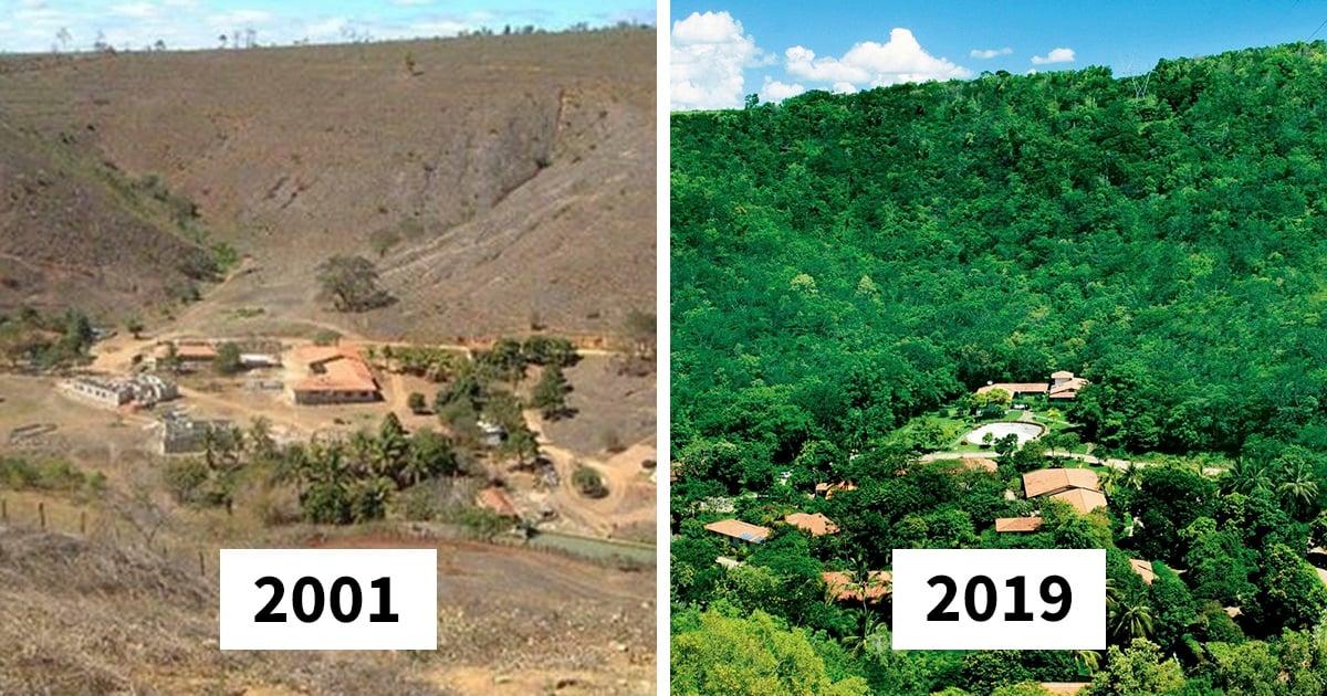 Casal brasileiro refloresta 600 hectares para dar lar a 500 espécies ameaçadas de extinção