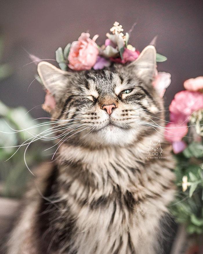 Resultado de imagem para Animais com flores na cabeça