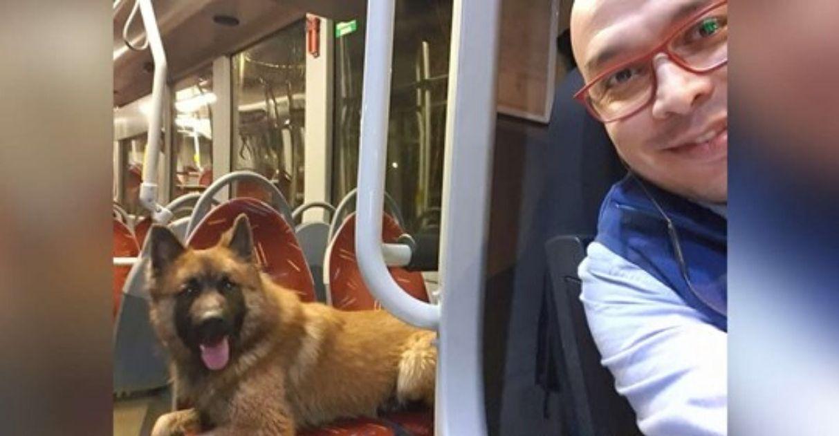 Motorista de ônibus da carona para cãozinho perdido voltar pra casa